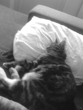 Must have pillow. Tratten- Winter 2009